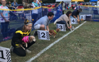 Dogs in the Chute of a Dog Race