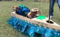 Two Dogs in a Cardboard Boat